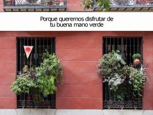 Concurso_balcones_madrid_rebrota_malasaña_madrid_6