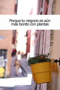 Concurso_balcones_madrid_rebrota_malasaña_madrid_7
