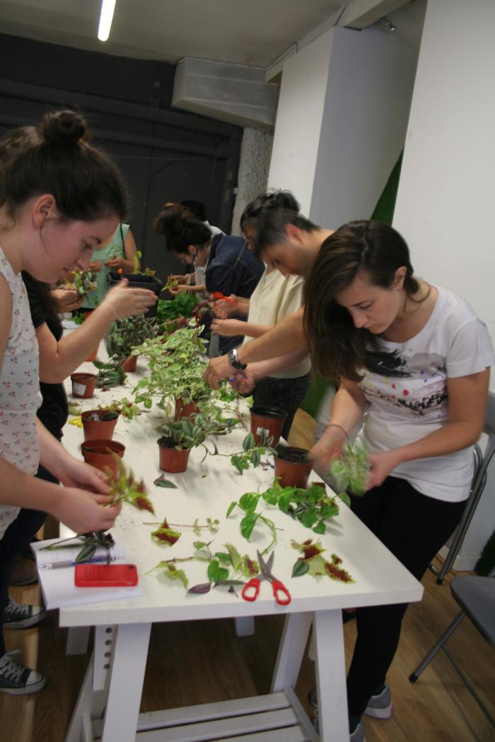 segundo taller de jardiner a ecol gica en balcones y